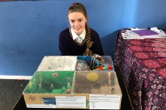 Yr 7 EcoSystem Project